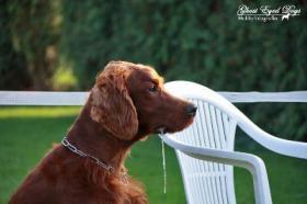 Foto 5 Tierfotografie Ghost Eyed Dogs