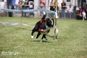 Foto 6 Tierfotografie Ghost Eyed Dogs