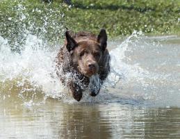 Foto 2 Tierfotografie & Workshops