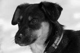 Tierfotoshooting - Augenblicke mit ihrem Liebling für immer festhalten