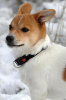 Foto 4 Tierfotoshooting - Augenblicke mit ihrem Liebling für immer festhalten