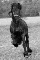 Foto 5 Tierfotoshooting - Augenblicke mit ihrem Liebling f�r immer festhalten