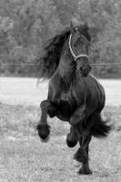 Foto 8 Tierfotoshooting - Augenblicke mit ihrem Liebling f�r immer festhalten