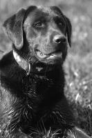 Foto 11 Tierfotoshooting - Augenblicke mit ihrem Liebling f�r immer festhalten