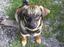 Tierfreunde suchen bitte
