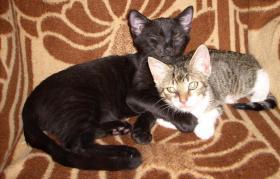 Tierheilpraxis für Haus- und Kleintiere und Pferde