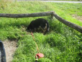 Foto 2 Tierisch gute Geschenke Gutscheine : Hunde Führerschein    66 Euro  Kassel