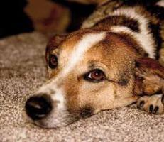 Tierische Weihnachtsfreuden für Hunde und Katzen