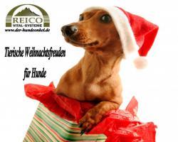 Tierische Weihnachtsfreuden für Ihren Hund