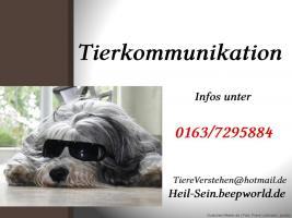 Tierkommunikation und Tierheilung