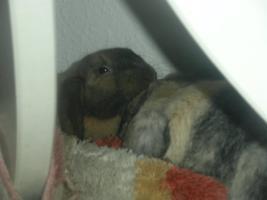 Foto 5 Tierkommunikation - ich bin für Sie und Ihr Haustier da :)