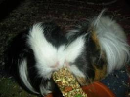 Foto 6 Tierkommunikation - ich bin für Sie und Ihr Haustier da :)
