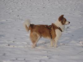 Tiernothilfe Moldawien e.V. sucht für Sammy ein zuhause!