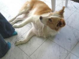 Foto 2 Tiernothilfe Moldawien e.V. sucht für Sammy ein zuhause!