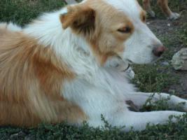 Foto 3 Tiernothilfe Moldawien e.V. sucht für Sammy ein zuhause!