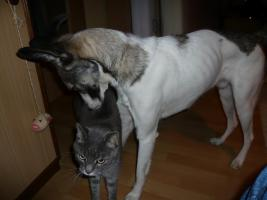 Foto 2 Tiernothilfe Moldawien e.v. sucht zuhause f�r Snoopy!