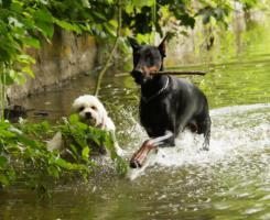 Foto 3 Tierpension, Tierbetreuung, Urlaubsbetreuung von Hunde, Katzen usw.