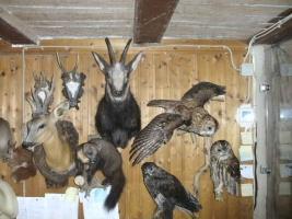 Tierpräparatesammlung