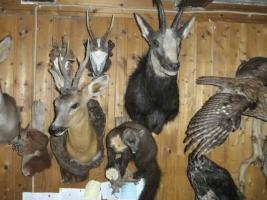 Foto 2 Tierpräparatesammlung