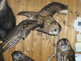 Foto 5 Tierpräparatesammlung