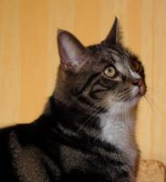 unser Oskar, der Frechdachs