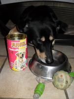 FOOD DOG 006