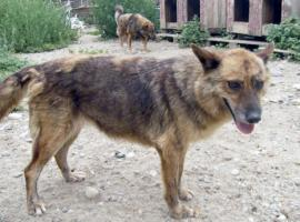 Tierschutzhund Carla(geb. 2003) sucht neues Zuhause
