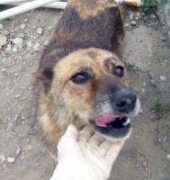 Foto 2 Tierschutzhund Carla(geb. 2003) sucht neues Zuhause