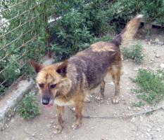 Foto 3 Tierschutzhund Carla(geb. 2003) sucht neues Zuhause