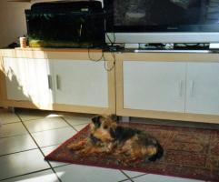Tierschutzhund Micky sucht Zuhause