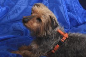 Foto 2 Tierschutzhund Micky sucht Zuhause