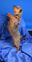 Foto 3 Tierschutzhund Micky sucht Zuhause