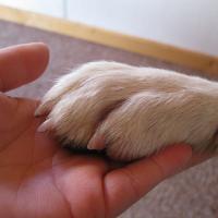 Tiersitten & Hunde auführen