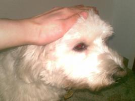 Tiertherapie für Hunde