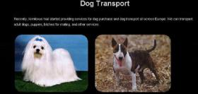 Tiertransport