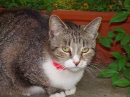 Tigerkatze Romy sucht Schmusepartner