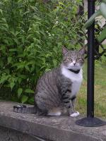 Foto 2 Tigerkatze Romy sucht Schmusepartner