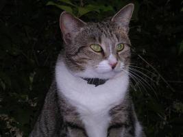 Foto 4 Tigerkatze Romy sucht Schmusepartner
