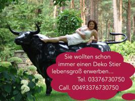 Foto 2 Tja wenn Dein Nachbar ne Deko kuh kauft dann hol Dir doch einen Deko Bullen...