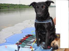 Toby - flinkes Wiesel im Hundepelz