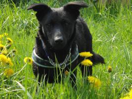 Foto 2 Toby - flinkes Wiesel im Hundepelz