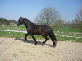 Foto 6 Toller Friesen-Wallach (KFPS)