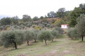Toller Olivenhain Ital. Adria Abruzzen bei Pescara 20km z.Meer