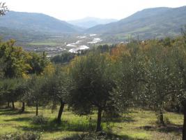Toller Olivenhain Italien Adria Abruzzen  beiPescara