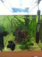Foto 3 Tolles 200 L Eheim Aquarium zu verkaufen!!!!