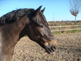 Tolles Pony sucht neue Besitzer