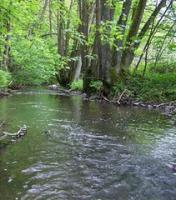 Top Angelgewässer*Bach*Forellenbach im Bergischen Land*Pacht*Verpachtung*Angler*Fliegenfischen