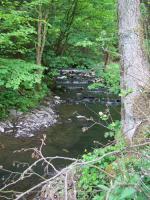 Foto 2 Top Angelgewässer*Bach*Forellenbach im Bergischen Land*Pacht*Verpachtung*Angler*Fliegenfischen