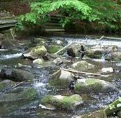 Foto 3 Top Angelgewässer*Bach*Forellenbach im Bergischen Land*Pacht*Verpachtung*Angler*Fliegenfischen