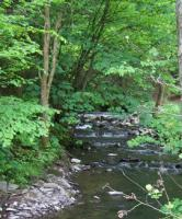 Foto 5 Top Angelgewässer*Bach*Forellenbach im Bergischen Land*Pacht*Verpachtung*Angler*Fliegenfischen